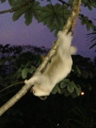 La Mariposa Hotel: sloth