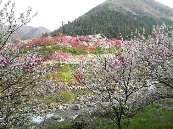 Achi-mura, Japan: gessennonnsenn