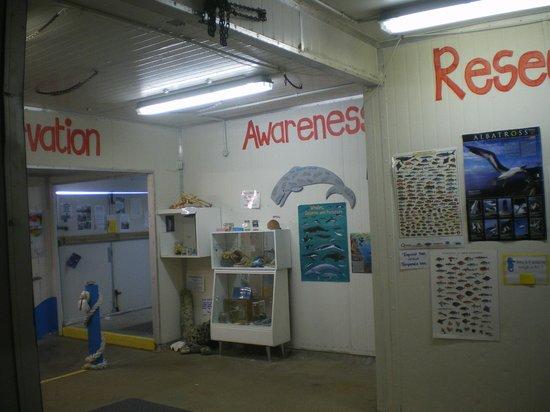Kaikoura Marine Aquarium : Interior