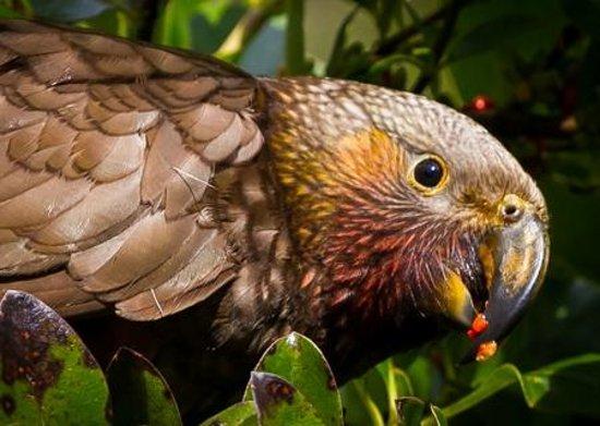 ZEALANDIA Sanctuary : Photo provided by Zealandia