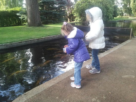 Salmon Ponds Heritage Hatchery and Gardens: My girls having a great time feeding the fish
