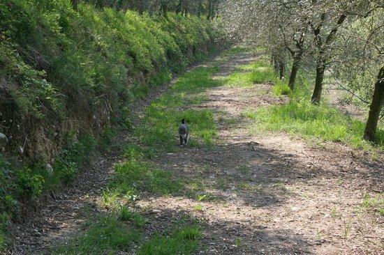 Bio Agriturismo Vojon: Passeggiata nell'oliveto