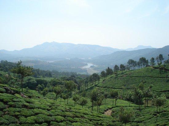 Club Mahindra Munnar: Tea Gardens