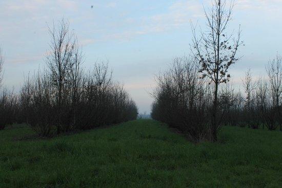 Agriturismo Ca Roma: la vista dalla camera