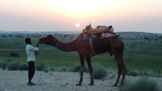 "Camp Dera Eco : ""Sunset and Camel is perfect"""