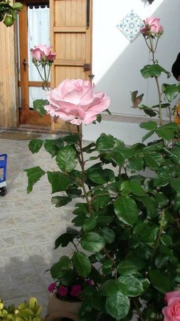 Uliveto Guest House: flowers