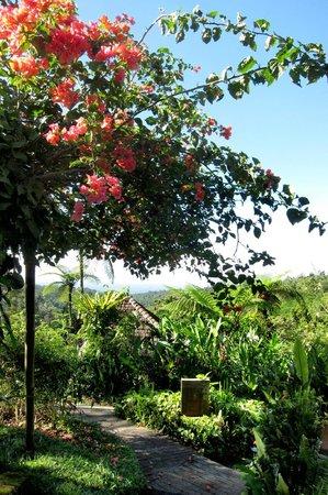 Sarinbuana Eco Lodge: The view