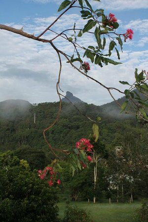A View of Mt Warning Bed & Breakfast: A View of Mt Warning