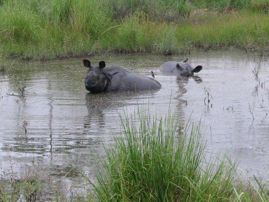 Manas Wildlife Sanctuary