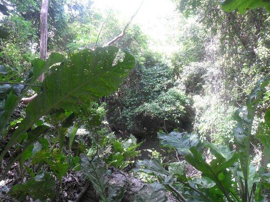 Camping Tayrona: Exuberante vegetación - vía al camping