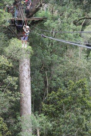 Tsitsikamma Canopy Tours: Zip Line