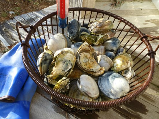 Oyster Cove B&B On Wellfleet Harbor: A staple: oysters & cherrystones.