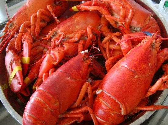 Oyster Cove B&B On Wellfleet Harbor: Lobster boil.