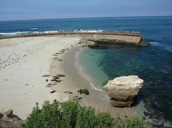 La Jolla Cove: Sea pier to watch seals
