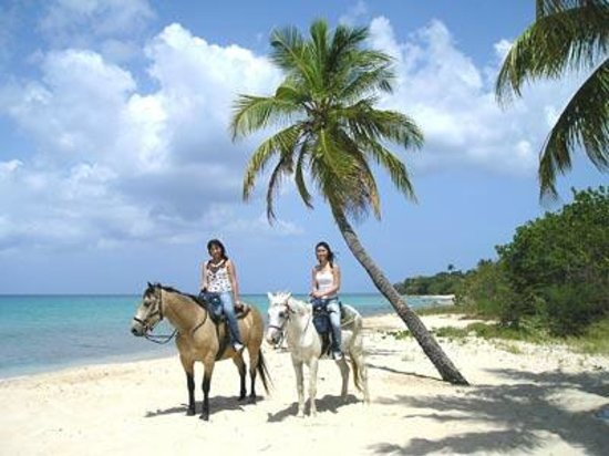 Horseback Riding In Us Virgin Islands