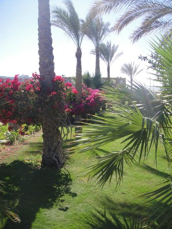 Royal Brayka Beach Resort: beach gardens