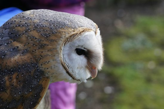 Kirkleatham Owl Center: Not camera shy