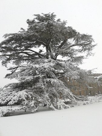 Rowton Castle: The most amazing snow covered cedar tree in front of the castle ever