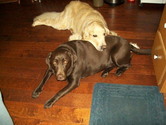 Blue Hen Bed & Breakfast: Bailey and Brandy Eschenbrenner