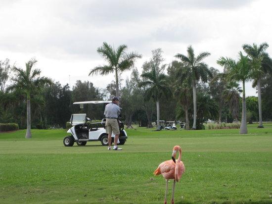 Hollywood Beach Golf Resort: Flamingos flocking on hole #2