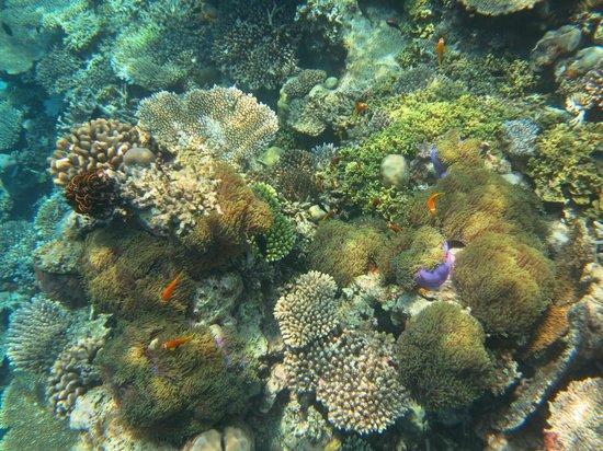 앙사나 아이후루, 몰디브 사진