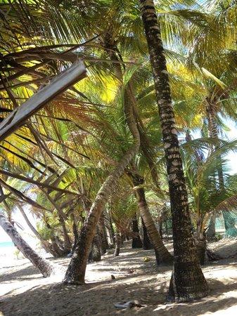 Parador MaunaCaribe: naturaleza por doquier