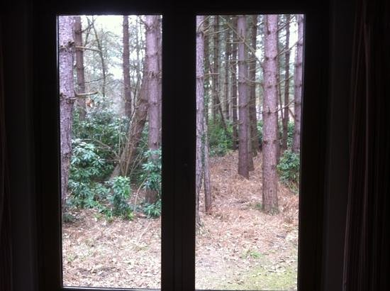 Griffon Forest Lodges: view from main bedroom