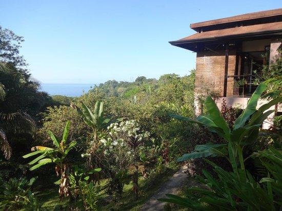TikiVillas Rainforest Lodge & Spa: Meerblick