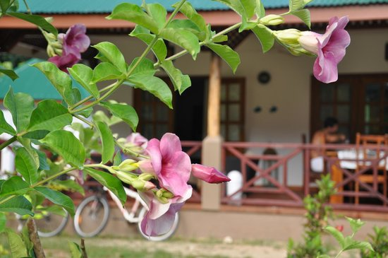 Paodise Guesthouse: garden