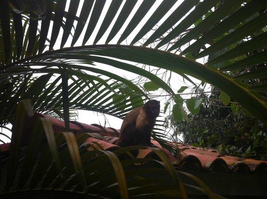 Cabarete Maravilla Eco Lodge & Beach : local resident