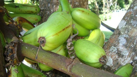 Cabanas El Rucio: a different type of  platanos