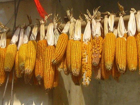 Jiang's Hakkas Round Building : Sweet corn