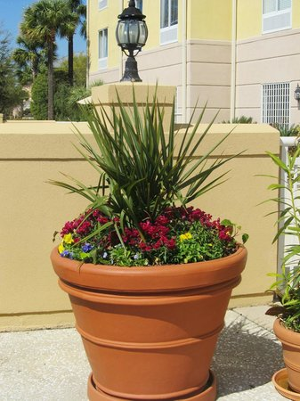 SpringHill Suites Charleston Downtown/Riverview: Pretty planter on the patio