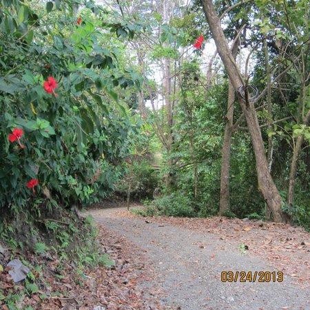 The Preserve at Los Altos: path to beach