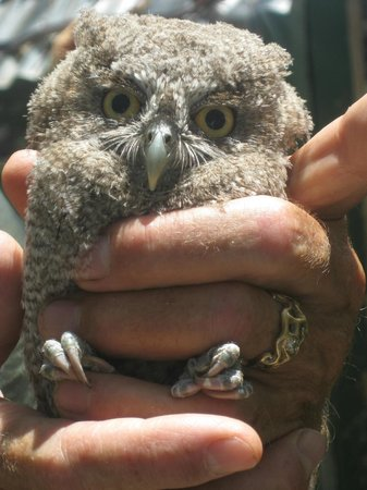 Nosara Wildlife Sanctuary at Sibu : head shot