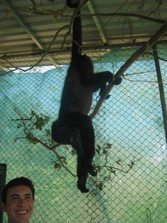Nosara Wildlife Sanctuary at Sibu : Monkey on the move