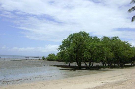 Cova da Onca : Praia do Magalhães com a maré seca.