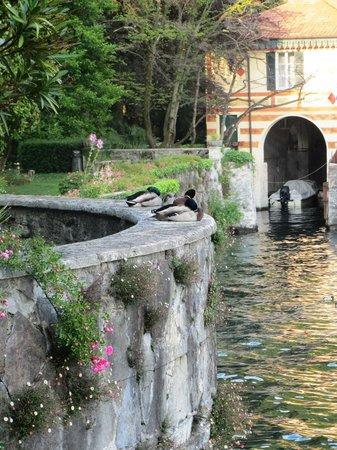 Hotel Villa Cipressi: Ducks in garden