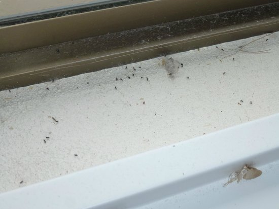 Noosa Shores Resort: Dead insects and mould on window sill in bedroom