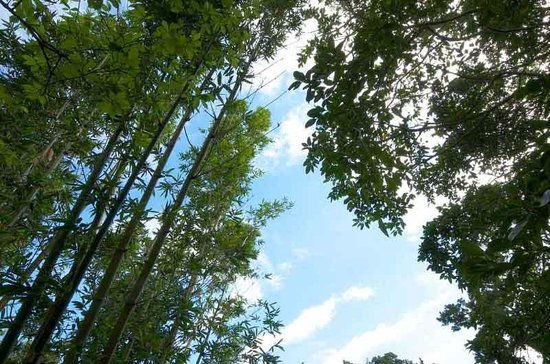 Natural Stone Garden: Bamboo and Blue Sky