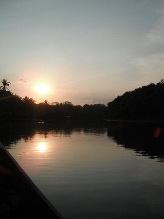 Cocomar Beachfront Hotel and Island Resort: Mangrove tour