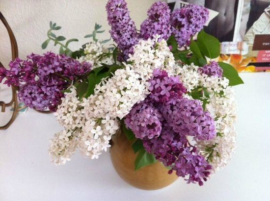 Irish Rose Inn: Lilacs from Chris