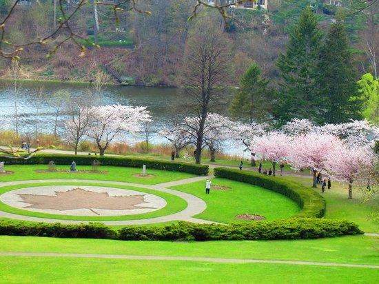 High Park : Cherry Blossom 1