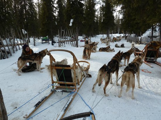 Lapland Hotel Saaga: One can have an own dog-sleigh ride near by