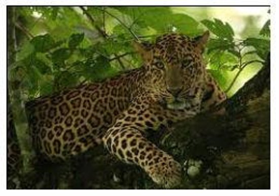 Kabini Dam: Jungle Safari: We'll understand if you are a nature lover and want to give the gentle jumbo a mi