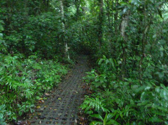 Finca Luna Nueva Lodge: Small trail