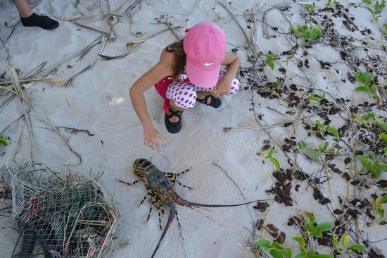 Protea Hotel Dar es Salaam Amani Beach: Crayfish catch of the day