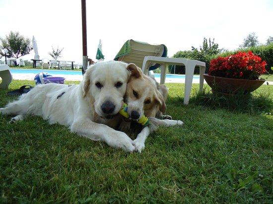 Agriturismo Fattoria Gravanella: I nostri cani a bordo piscina
