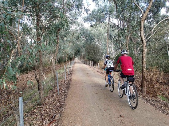 Mansfield, Australia: Most days you will meet others on the trail