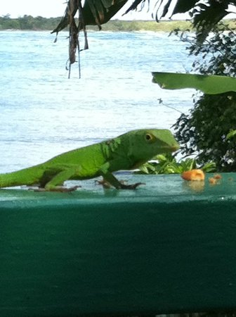 Zion Country Beach Cabins : Lizard with ginger cookies